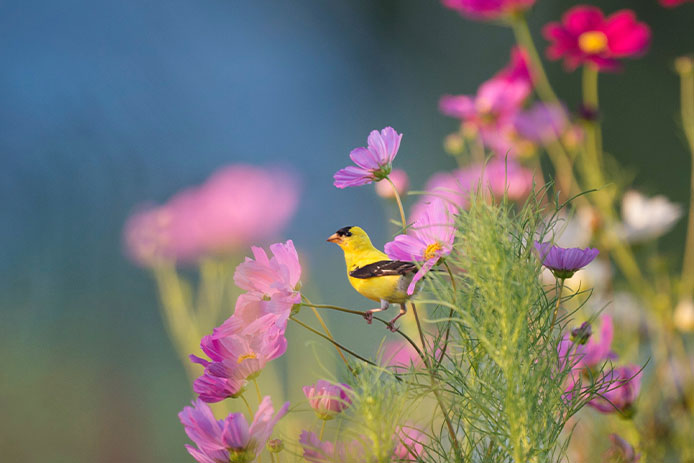 Bird sitting on flowers